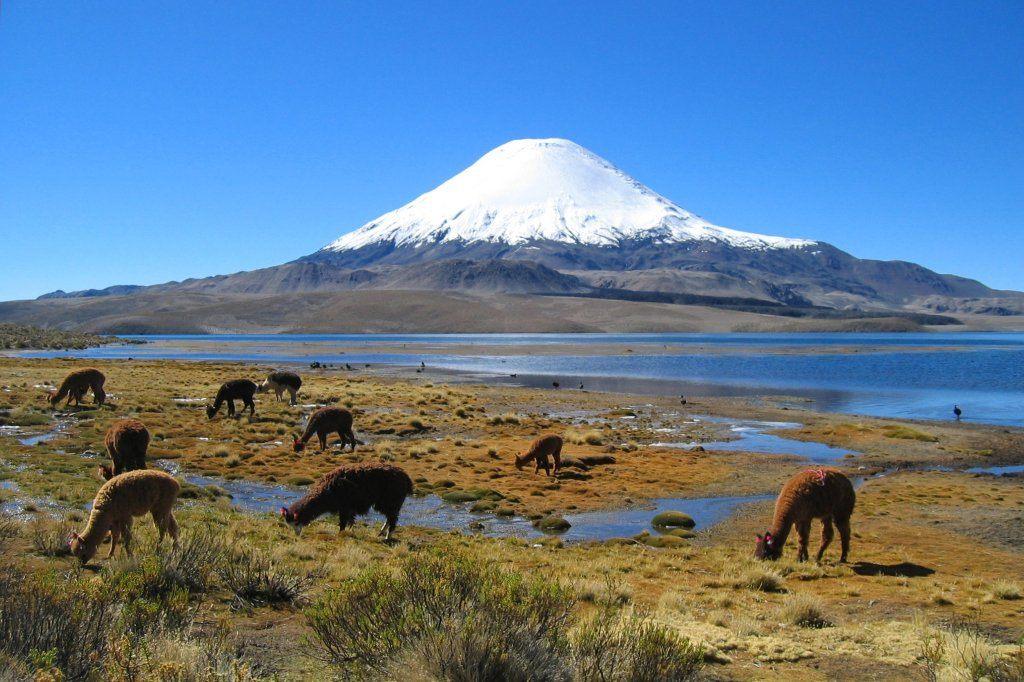 Чили Фото -2
