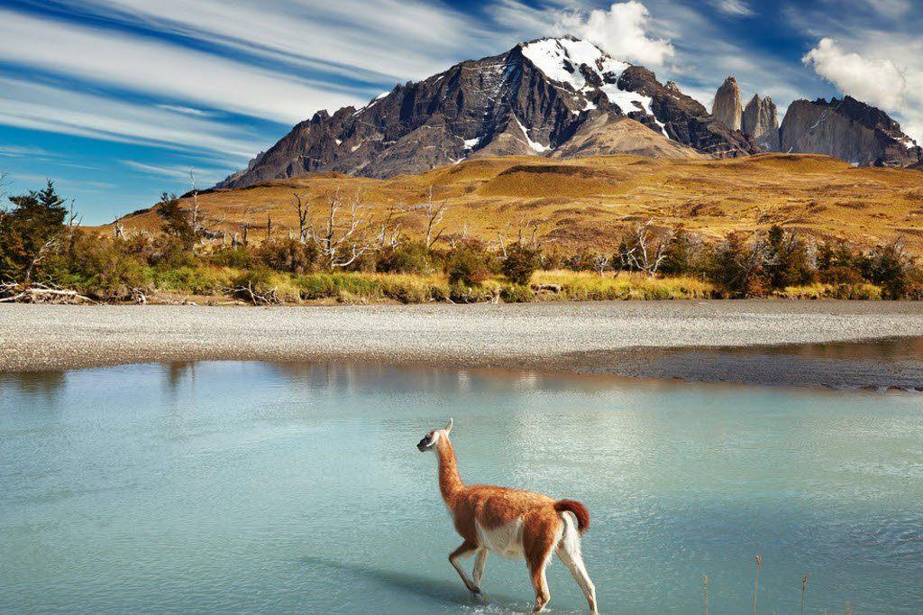 Чили Фото -3