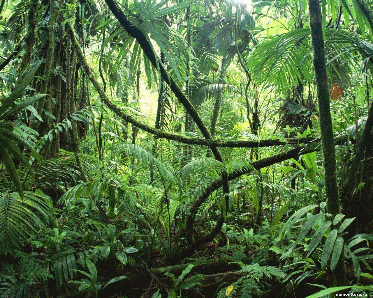 Коста-Рика Фото -1