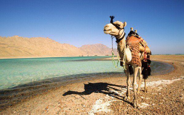 Египет Фото -2