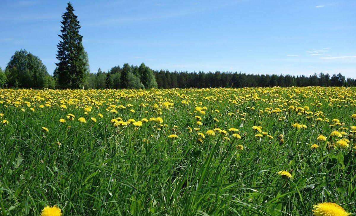 Финляндия Фото -6