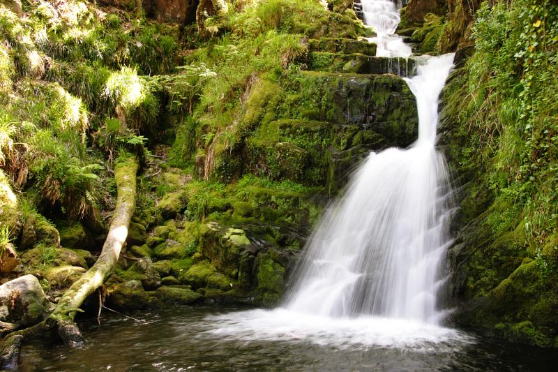 evergreen,forest,freshness,healthy eating,heaven,horizontal,ideas,idyllic,irish culture,killarney - ireland