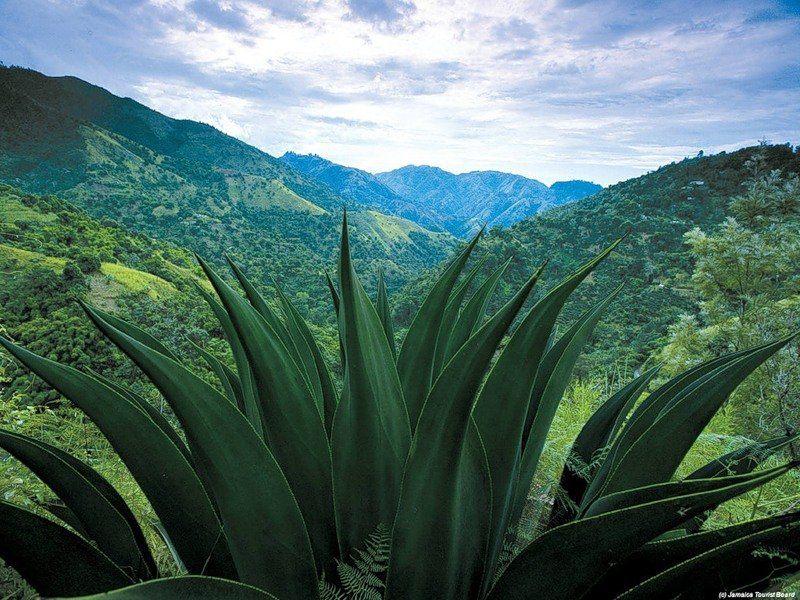 Ямайка Фото -3