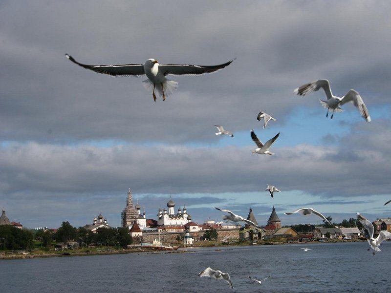 Соловецкие Острова. Фото - 5